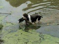 Jenny na MMŠ v Luhačovicích přináší kachnu z hluboké vody.