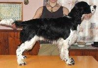 Xi-Xao (Bubušek) - BZH II.cena, pracovní pes u koní