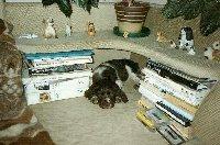 Její neoblíběnější místečko, kdy jsme si ji přinesli domů. Asi proto byla tak moudrá, když spala mezi knihami...
