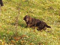 Chlupína (Edyna) pěkně huňatí na zimu. Už zaštěkává kočky, krásně slídí a prolítne každou louži, či rybník.