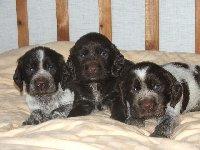 Pejsci Jack, Jago a Jumbo ve čtyřech týdnech.