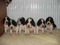 Štěňátka ve čtyřech týdnech věku - zleva Kerd, Kargus, Karina, Kara, Kajka a Kendy.