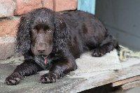 Jessie je náruživá vodařka a tak je hodně často celá mokrá.