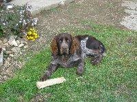 Jerry křepeláček narozený 5.4.2011