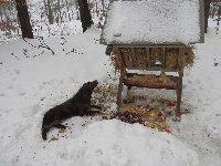 Chlupka - Edynka kontroluje, zda je krmení pro zvěř v lese v pořádku.