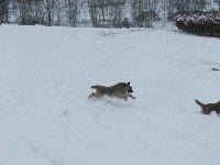 Ještě před pár dny bylo u nás dost sněhu...