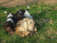 Lovka s Larou objeveli vyšušenou škáru ze selete.