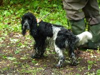 Argo celý mokrý, jak jsem ho i páníka honila na slídění.