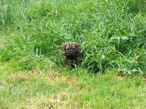 Zjistil jsem, že se v trávě skvěle šmejdí!