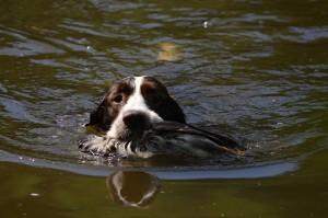 A Xaro nese ještě kachnu z vody.
