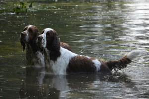 Nejkrásnější fotka srazu - Exy a Ebony ve vodě...