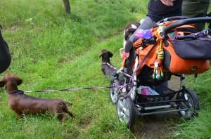 Jezevčice hlídali kočárek s miminkem. Jezevčice jsou spolubydlící Xara a Kerryho.