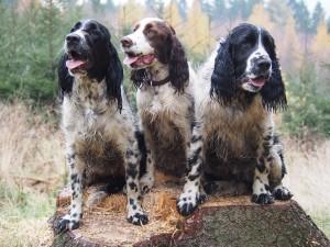 Trojka sourozenců - Niké, Naiky a Nero