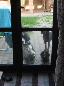 Chceme dovnitř za míminkem!
