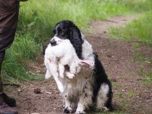 Hubert přinesl králíka - no lépe zbarveného králíka jsem v lese nenašel...