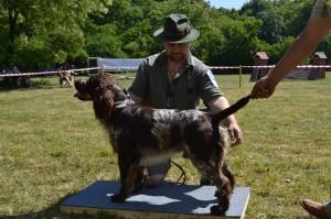 Jack z Větrné paseky - klubová výstava Loučeň, výborný 2, r.CAC, třída otevřená (konkurence 8 psů)