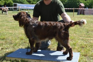 Largo - třída otevřená - výborný 4 (konkurence 8 psů)