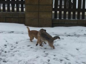 Řádění Hedy se Zarem ve sněhu.
