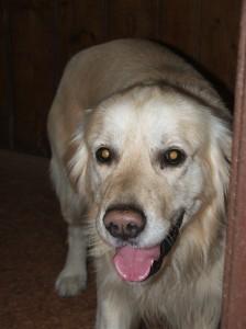 Adárek - chytrý, poslušný, velmi milý pes.