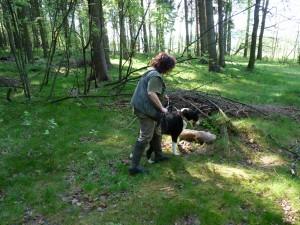S karelským medvědím psem výcvik na barvě.