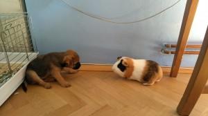 Kiruška se seznamuje s novým kamarádem.