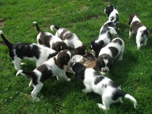 """Pegásek pomáhá se snídaní partě """"R"""". Opět jedno štěně je mimo záběr..."""