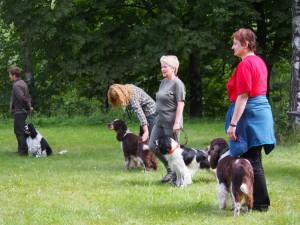 Výstava psi - předvádí se Nero, Ramos Spoorfinder, Godin z Lipových dolin a Iran z Větrné paseky