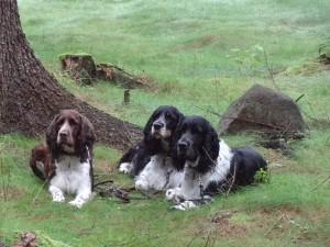 Dina Ester Cizera, Akim Darwin Cizera a Ester z Úpatí Džbánu přihlížejí v lese.