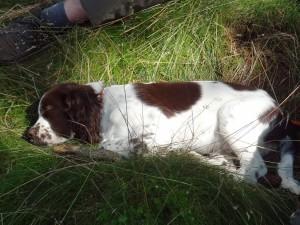 Rico už toho měl dost a tak hezky usnul v travičce...