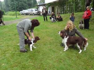 Nejkrásnější psi srazu - štěně Reisha z Větrné paseky a fena Engie Just Merry z Rakouska.