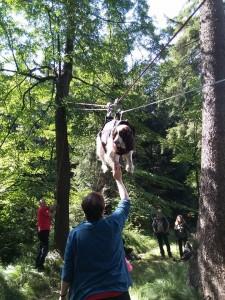 Nejodvážnější pes na lanovce - Orsana.
