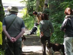 Hubert coby vítězný pes v soutěži aportu přináší kachnu.