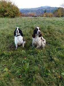 Urousaní v mokré trávě, ale štastní Mendy a Edwin.