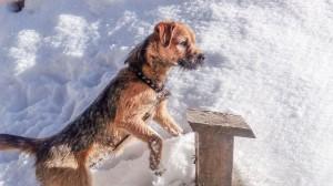 Kery Ostrý lovec o letošní sněhové zimě.