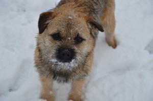 Jessie v letošní zimě.