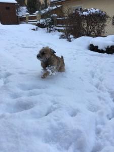 Bordíci sníh milují.