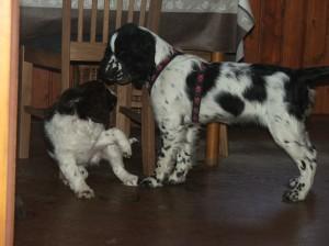 Na návštěvu přijela Sárinka a Timmy si s ní velmi rozuměl. Byl štastný, že má někoho na hraní.
