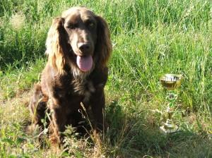 Velmi inteligentní a dobře cvičitelný pes byl Louis - Tedy a vyhráli jsme spolu BZ v I. ceně.