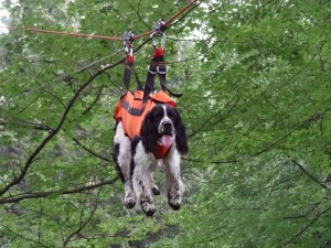 Godin jede v záchranářské lanovce.