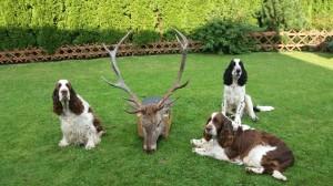 Ebony, Exy zaučují mladého Scottyho v lovu vysoké zvěře, lovu zdar!