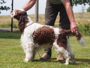 Nejkrásnější pes srazu - Ebony z Větrné paseky