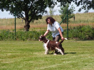 Rambo della Giuliana, coby ve třída starších psů získal známku výborný.