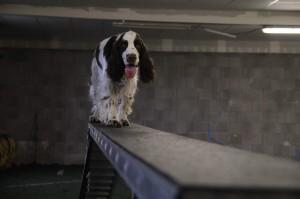 A pozor, Portos je všestranný pes. Kladina není pro nic co by nezvládal.