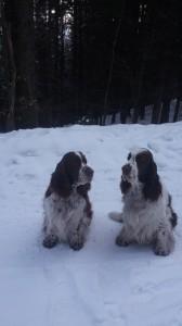 Desetiletí naši chlapci Ebony a Exy - nar. 3.3.2008