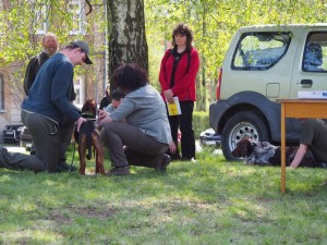 Tak pojď, pořádně tě změříme - měření srbského honiče.