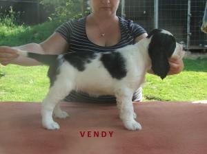 Štěňata Mendy - foto v sedmi týdnech a foto některý štěňat již v nových domovech.