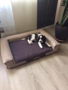 Ale nebojte, nespím jenom venku pod židlí...mám svůj krásný pelíšek!