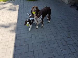 Viky se svým kámošem Dagem v novém domově. Dag je syn našeho Giuliana.