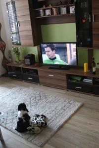 Vigo sleduje sportovní zprávy, musí se coby budoucí záchranář naučit všechny sporty!