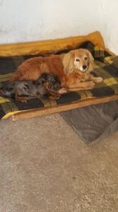 Capík spí se svým starým kámošem Tobbym.